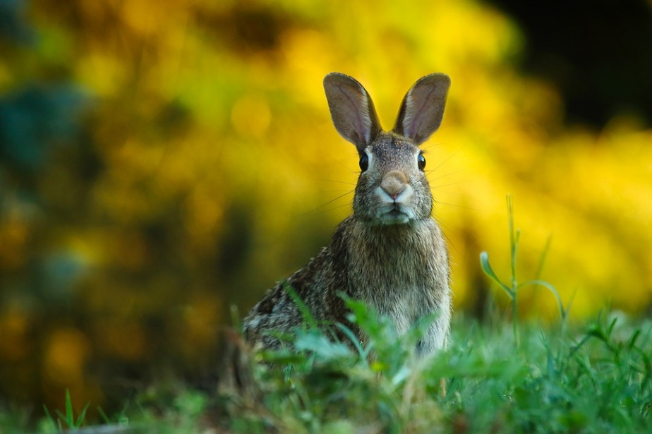 September 28th International Rabbit Day