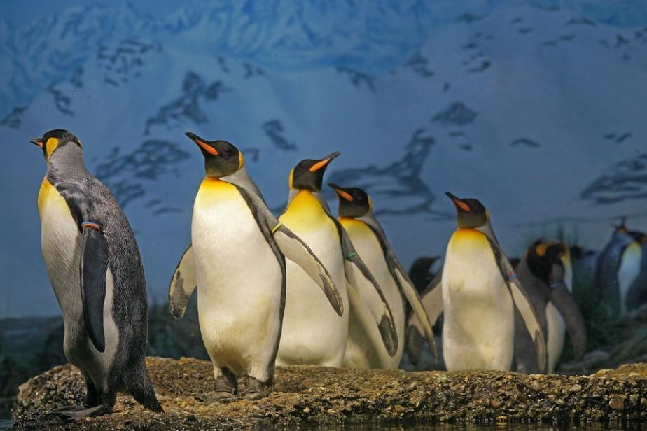 April 25th World PenguinDay