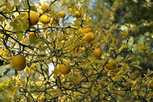 May 16th Plant A Lemon TreeDay
