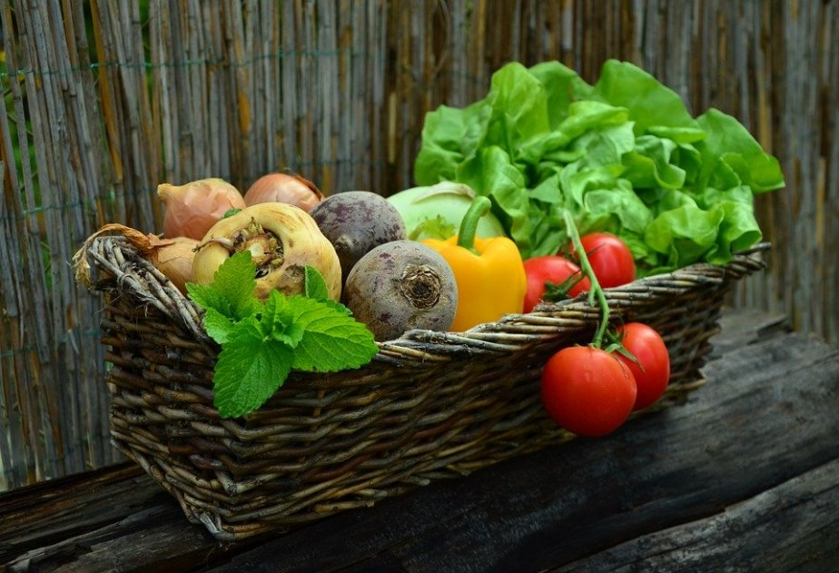 May 19th World Plant A Vegetable Garden Day