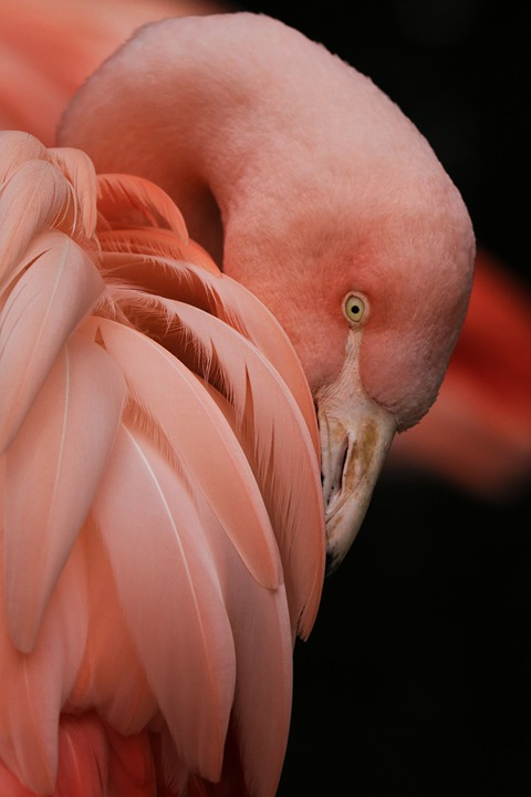 June 23rd Pink Flamingo Day