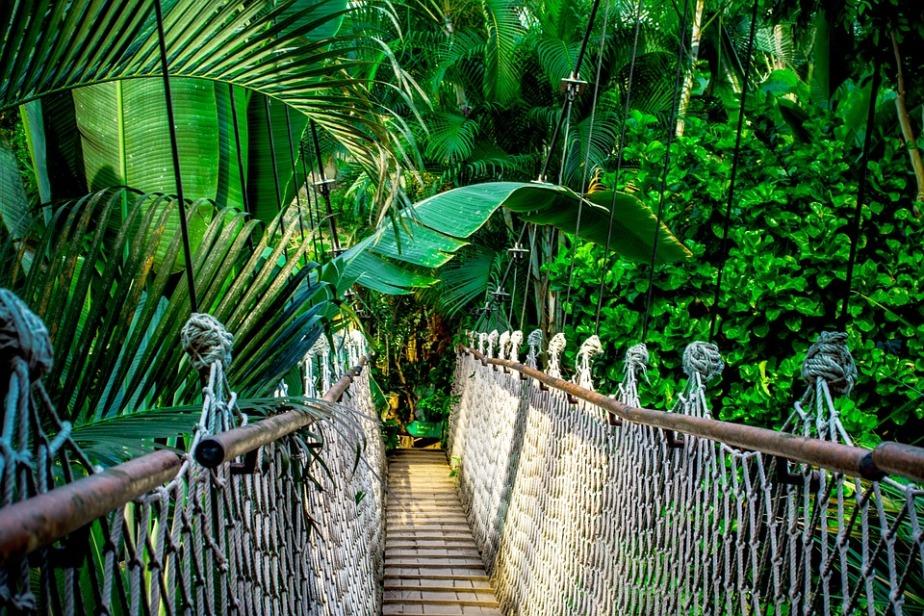 June 22nd World RainforestDay