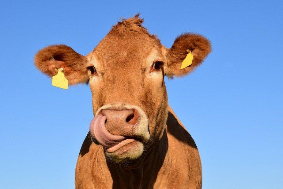 July 15th Cow AppreciationDay