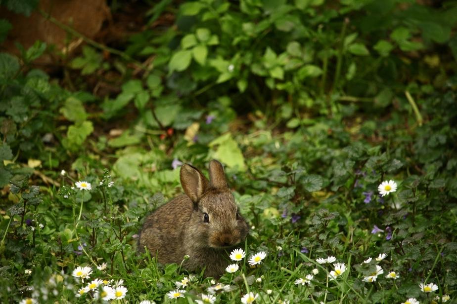 September 26th International RabbitDay