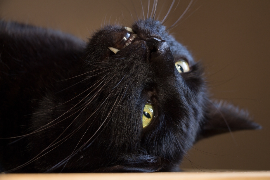 October 27th Black Cat Day