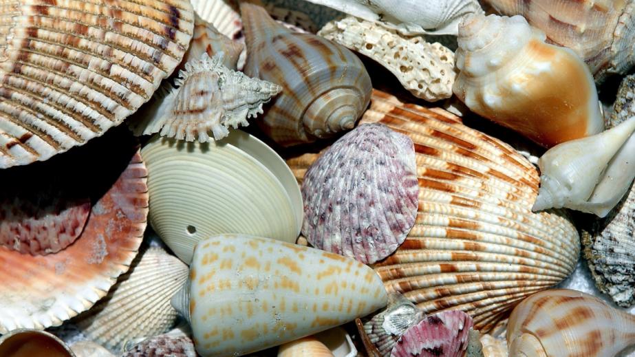 June 21st National Sea ShellDay