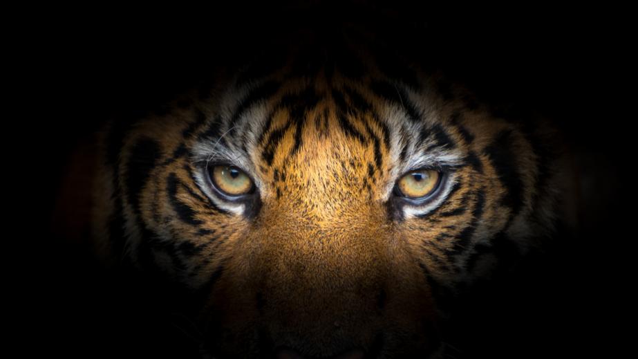 July 29th International TigerDay