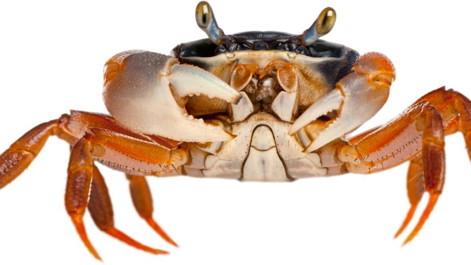 September 14th International Crab FestDay
