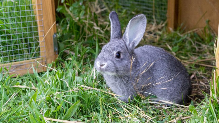 September 25th International RabbitDay