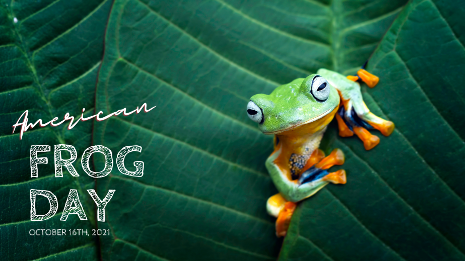 October 16th American FrogDay