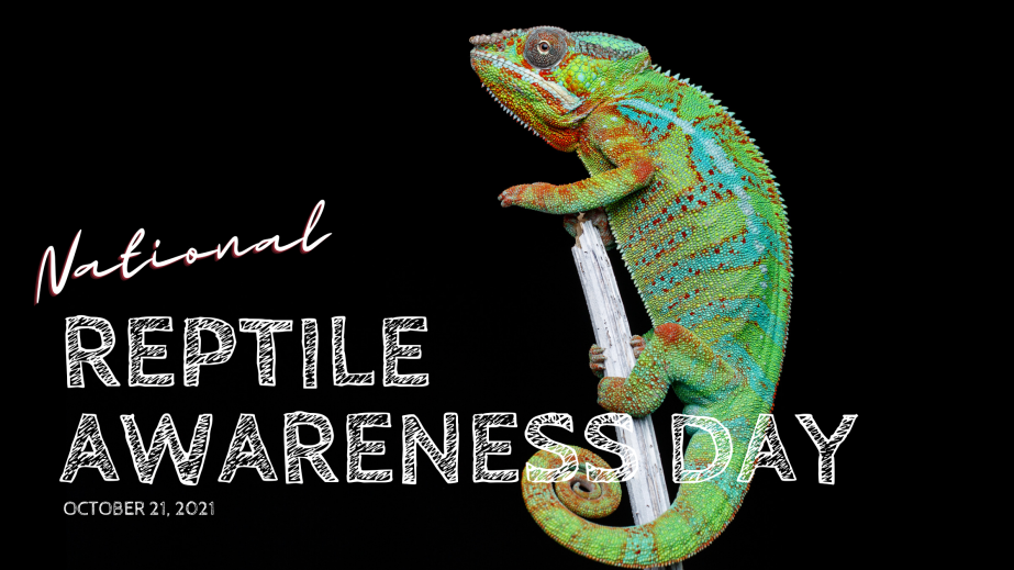 October 21st National Reptile AwarenessDay